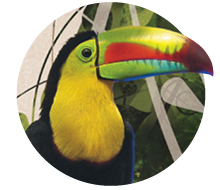 Bird watching in Colombia brochure